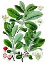 Herbs Spices Photos